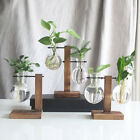 Desktop Hanging Glass Plants Planter Bulb Vase With Stand Home Table Decor Pot