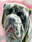 NEO Neapolitan Mastiff Dog Art Print of Watercolor Painting Judith Stein Signed