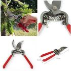 Garden Bonsai Flower Tree Pruning Scissors Secateurs Shears Pruners Knife Cutter