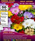 FREESIA BULBS - Old Fashion Perfume Mix - MULTI   LISTING