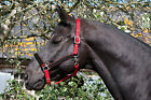 RHINEGOLD DIAMANTE CRYSTAL BLING! HEADCOLLAR -  RED - SHETLAND, PONY & COB SIZE