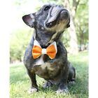 Orange and White Bow Tie for Dogs - Sizes M, L - FREE SHIPPING
