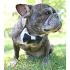 Navy and White Bow Tie for Dogs (UOH) - FREE SHIPPING