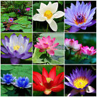 10Pcs Bonsai Lotus Aquatic Water Lily Flower Bowl Pond Fresh Seeds Perfume Rare