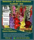 ARUM  LILY BULBS*  Lords and Ladies  15x  SEEDS