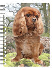 Cavalier King Charles Spaniel 3D Notebooks - Tri, Blenheim, Black/Tan, Ruby