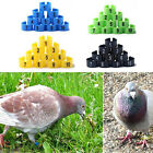 EP_ 100Pcs Bird Poultry Chicks Plastic 1-100 Numbered Pigeon Leg Bands Rings Nat