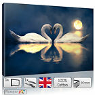 SWAN Deep Blue LOVE Romantic 70x70cm Canvas Picture Print Wall Art READY to Hang