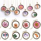 Natural Clover Dried Flower Gold Glass Round Locket Pendant Necklace Jewellery