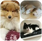 💕Dog/cat non-slip fleece/mat/bed for car, crate&home Washable+hygienic.Made UK
