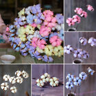 1/10Pcs Natural Dry Cotton Flower Plant Art Craft Wedding Home Floral Decor Gift