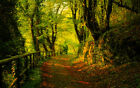 AUTUMN TREES FOREST PATH LANDSCAPE CANVAS PICTURE POSTER PRINT UNFRAMED #2193