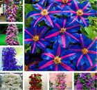 100 pcs/bag clematis plant, clematis seeds beautiful climbing plant flower seeds