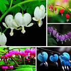 US 200PC Perennial Herbs Dicentra Spectabilis Flower Plant Bleeding Heart Seeds