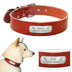 Genuine Leather Dog Collar with Personalised Pet Name Plate Free Engraved S M L