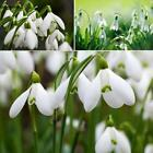 New Adorable Flower Fragrant Seeds Blooms Lily of the Valley Seeds n2un