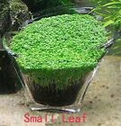 Aquarium Glossostigma Hemianthus Callitrichoides Seeds Water Grass Mini Leaf