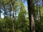 40 ACRES FORESTED DULUTH MINNESOTA PIXLEY ROAD PWER CREEK ON PROPERTYTALL TREES
