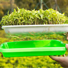 Hydroponics Seed Germination Tray Seedling Tray Sprout Plate Grow Nursery Tray H