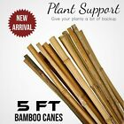 5FT Heavy Duty Bamboo Garden Canes Strong Thick Quality Plant Support Stick UK