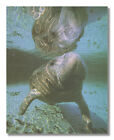 Manatee Ocean Whale Outdoor Wildlife Wall Picture