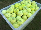 Used Tennis Balls - Ideal Dog Toys/Chews/Cricket/Beach - 6,15,30,50 or 60