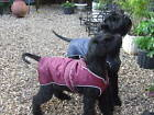 PADDED, WARM, WATERPROOF DOG COAT JACKET, NON-SLIP CHEST GUARD-NUTS ABOUT MUTTS