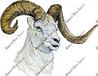 Dall Dall's Sheep Mountain Ram Auto Boat RV Camper Window Vinyl Decal Sticker