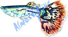 Fancy Guppy Aquarium Fish Almost Alive Vinyl Decal - Auto Car Truck RV Cell Cup