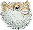 Puffer Fish Saltwater Almost Alive Vinyl Decal - Auto Car Truck RV Cell Cup Boat