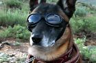 Doggles ORIGINALZ Dog Goggles Sunglasses Eye Protection: Choose CHROME or BLACK