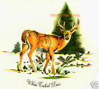 A04 ~ White Tailed Deer Ceramic Decals, Buck, Antlers, 5 sizes to choose from,  image