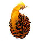 Gordon Griffiths Complete Golden Pheasant Head Grade 1 in 4 Colours