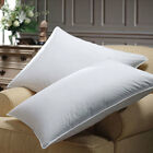 600 Fill Power White Goose Down Pillows By DOWNLITE