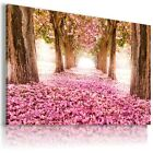 PINK PATH , View Canvas Wall Art Picture Large SIZES  L180  X