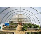 4 Year 6 Mil Clear Plastic Greenhouse Poly Film 32 ft. Wide - *VARIOUS LENGTHS*