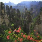 Chinese 100% real natural silk thread,su hand embroidery kits:mountain landscape
