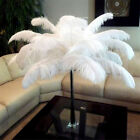 "10pcs 10.23"" White Natural Ostrich Feathers Wholesale-- US Stock"