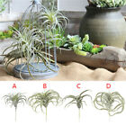 Artificial Plant Succulent Air Plants Home Decoration Wedding Bouquet Wall Decor