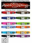 PREMIUM RED DINGO Dog Collars - All Sizes/Colors - Everyday Classic Solids