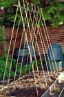 7Ft (213cm) Natural Wooden Bamboo Canes Plant Support Garden Thick Canes Sticks