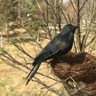 Halloween Black Raven Prop Feather Bird Witch House Decoration Crow Ornament7