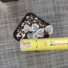 """2"""" pot Rare Live Succulent Plants String of hearts Variegated rooted"""