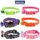 Ancol Luxury Safety Kitten Collar Bell Hi Vis Green Pink Orange Purple Red