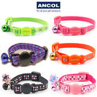 Ancol Luxury Safety Kitten Collar Bell Hi Vis Green Pink Orange Purple Black