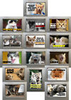 New, Quality Fridge Magnets - MORE Funny CATS, KITTENS, 15 to choose from - Cute