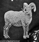 Big Horn Sheep Ram Laser Etched Glasses- CHOOSE your glass style