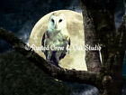 Barn Owl against Full Moon Signed Original Handmade Matted Picture Print A497