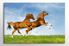 BEAUTIFUL HORSE PICTURE LARGE BOX CANVAS WALL ART STUNNING NEW PRINT A0 A1