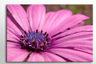 BEAUTIFUL FLORAL FRAMED WALL ART CANVAS PINK & PURPLE FLOWER PICTURE NEW PRINT